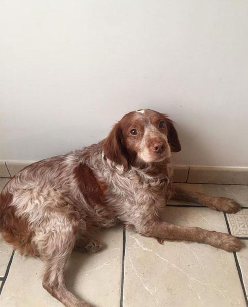 Osteopathie canine sur Hazebrouck