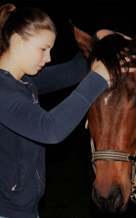 Osteopathie equine sur Armentieres